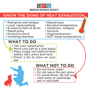 Pet Safety - Know the Signs of Heat Exhaustion