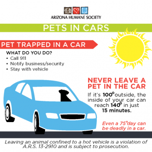 Pet Safety Tips For Summer - Pets In Cars