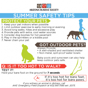 Pet Safety Tips For Summer - Protect Your Pets