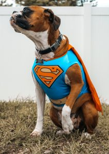 Halloween Dog Dress Up
