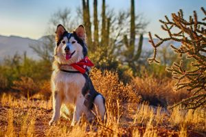 Dog in the desert