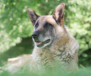 Old GSD