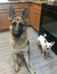 Akela and Ziggy