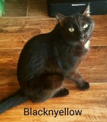 Blacknyellow