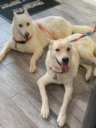 Kodi and Chara