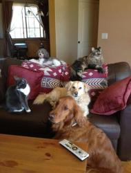 Dr Schelle's furry family